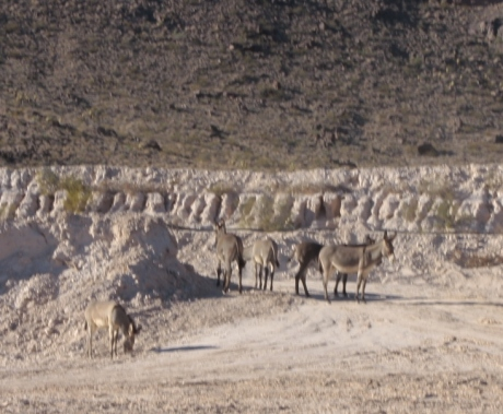 Wild donkeys all over the place.